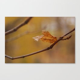 Leaves of Change 2 Canvas Print