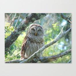 Smiling Owl Canvas Print