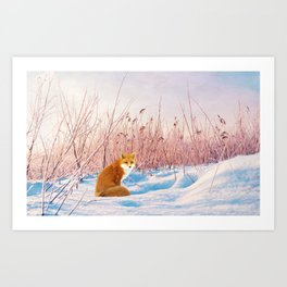 Red Fox in Snow Art Print