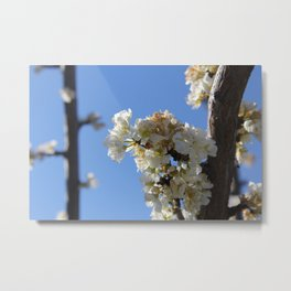 Fruit Blossoms Metal Print