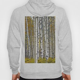 Birch Tree Grove in Autumn Hoody