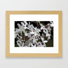 White Jasmines Framed Art Print