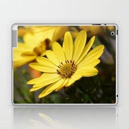 Yellow African daisy Laptop & iPad Skin