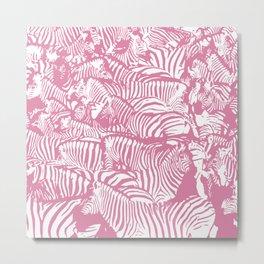 Pink Zebras Metal Print