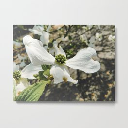 Dogwood 17 #easter Metal Print