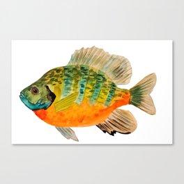 Bluegill Canvas Print