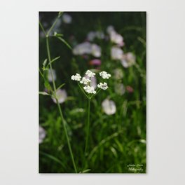 Blossom in the Breeze Canvas Print