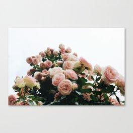 Climbing Roses at International Rose Test Garden Canvas Print