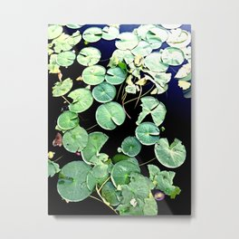 Blackwater Lily's  Metal Print