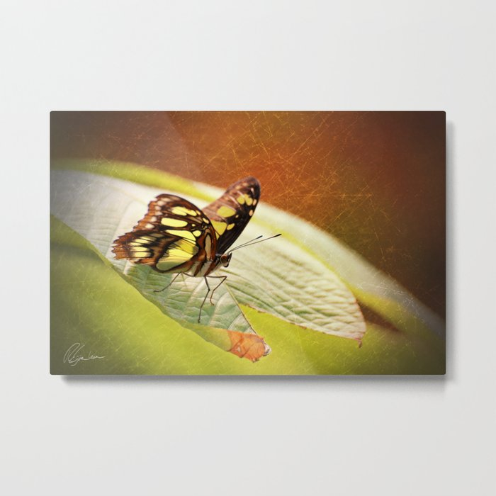 Butterfly - Ready for takeoff Metal Print