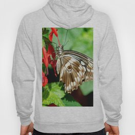Brown Swallowtail Butterfly Hoody