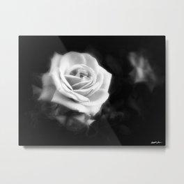 Pink Roses in Anzures 1 Dark Metal Print
