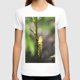 Yellow grasshopper T-shirt