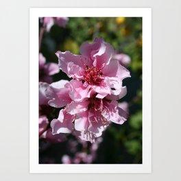 Peach Tree Blossom With Garden Background Art Print