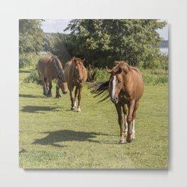 horses in the pasture Metal Print