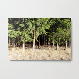 Germany Forest 1 Metal Print