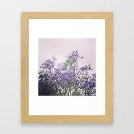 Jacaranda Framed Art Print