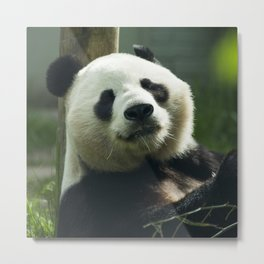 Sunshine the Panda  Metal Print