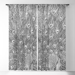Feathers - Black and White Sheer Curtain