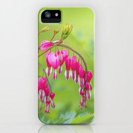 bleeding heart - Lamprocapnos spectabilis iPhone Case