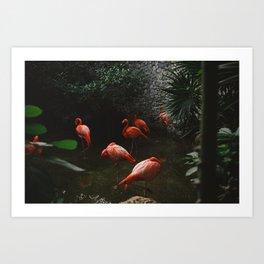 Flamingo bussiness Art Print
