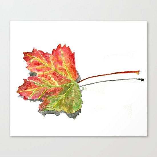 Autumn leaf of maple Canvas Print