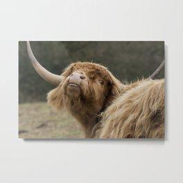 Funny Scottish Highland cow Metal Print