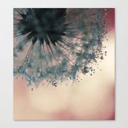 dandelion rose pink Canvas Print