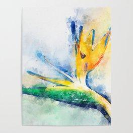 Bird Of Paradise Watercolor Art Poster