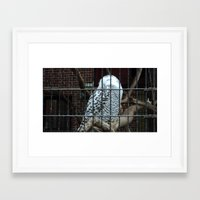 hedwig Framed Art Prints featuring Hedwig by CPKC27