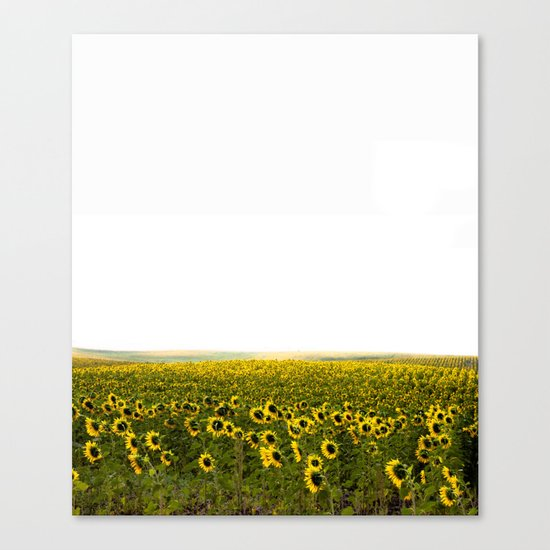 Summer fields Canvas Print