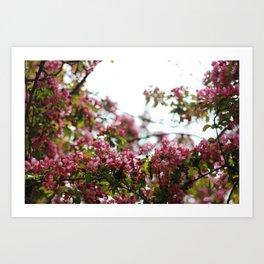 Pink Blossoms #01 Art Print