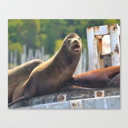 Sea Lion Canvas Print
