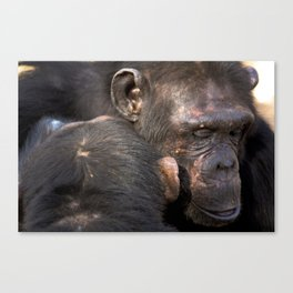 Grooming session Canvas Print