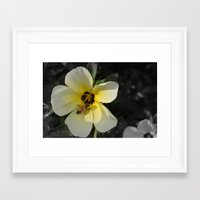 bee Framed Art Prints featuring Bee by Lia Bernini