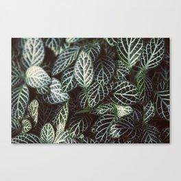 Botanical Gardens Zebra Leaf #398 Canvas Print