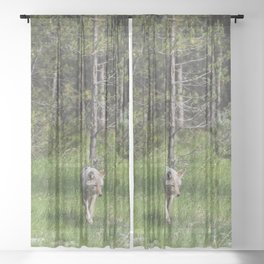 Yellowstone Coyote Wildlife Animals Photography Sheer Curtain
