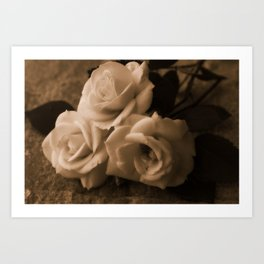 Old Roses Art Print