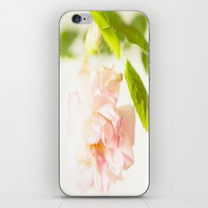 Romantic Soft Pink Rose iPhone & iPod Skin