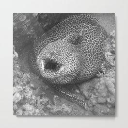 Coiled fat eel Metal Print