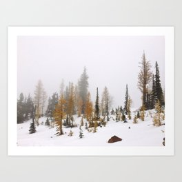Larch Trees Art Print