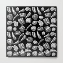 sea greyshells Metal Print