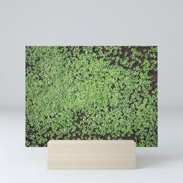 Tender shoots of white mustard Mini Art Print