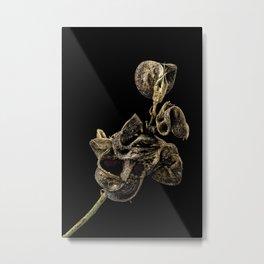 Alfalfa Metal Print