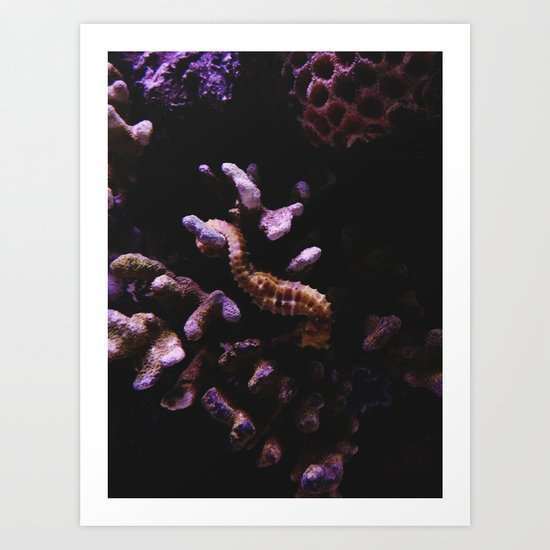 Sleeping Seahorse Art Print