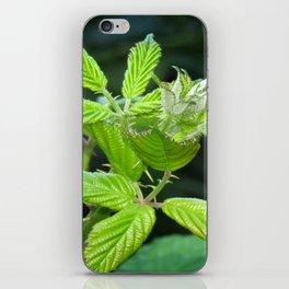 Blackberry Leaves iPhone Skin