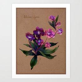 Helleborus lyrae Art Print