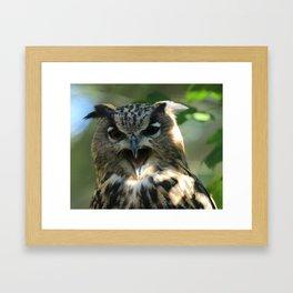 Speech of the owl Framed Art Print
