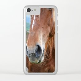 Close-up of a horse Clear iPhone Case