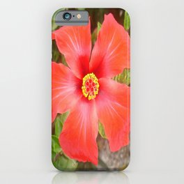 Head On Shot of a Red Tropical Hibiscus Flower iPhone Case